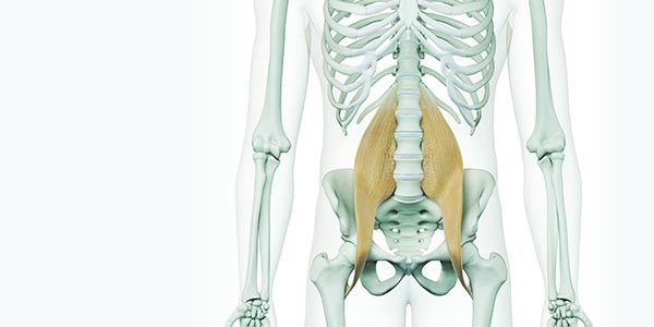 L'anatomie en mouvement , Le psoas
