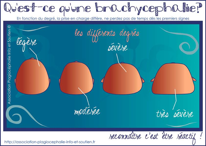 tetes-plates-brachycephalies